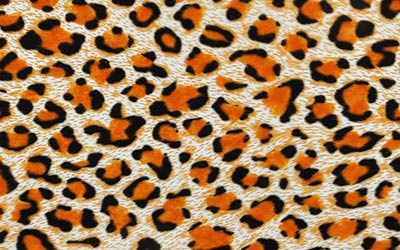 313-Leopard-Fur-Hydrographics-Film-White