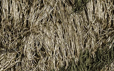 <strong>WTP-654:</strong> Digital Ghillie Proveil