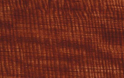 <strong>WTP-295:</strong> Medium Brown Willow